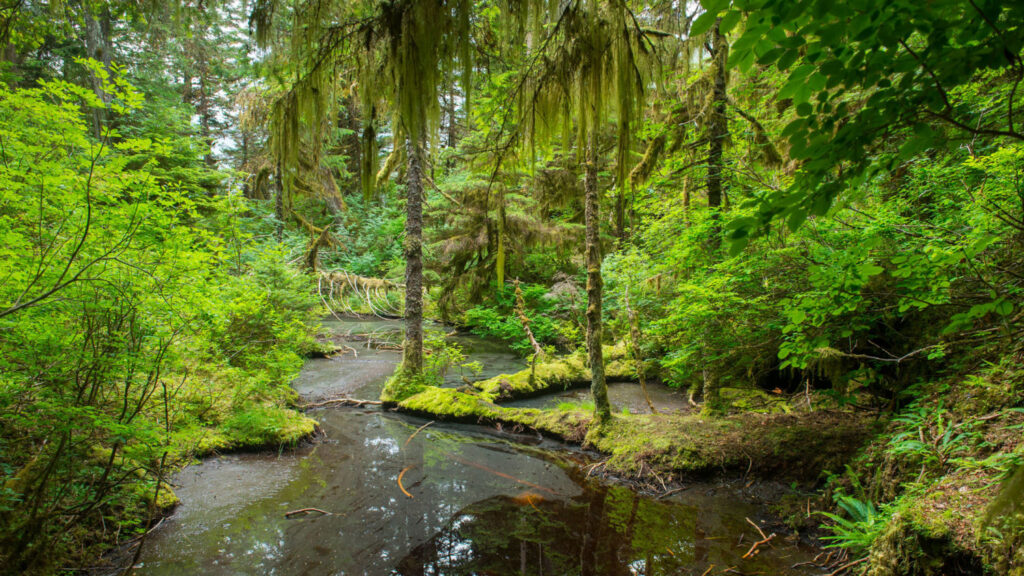 Tongass National Rainforest